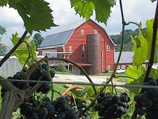 Rockbridge Vineyard